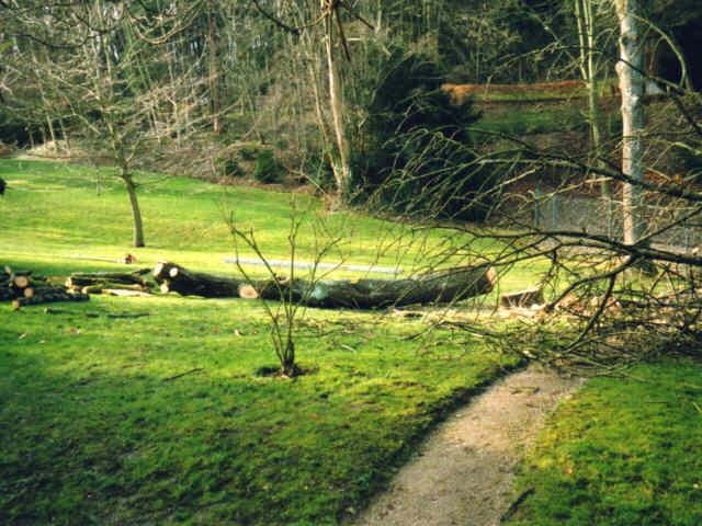 Parkpflege - Baumfällarbeiten