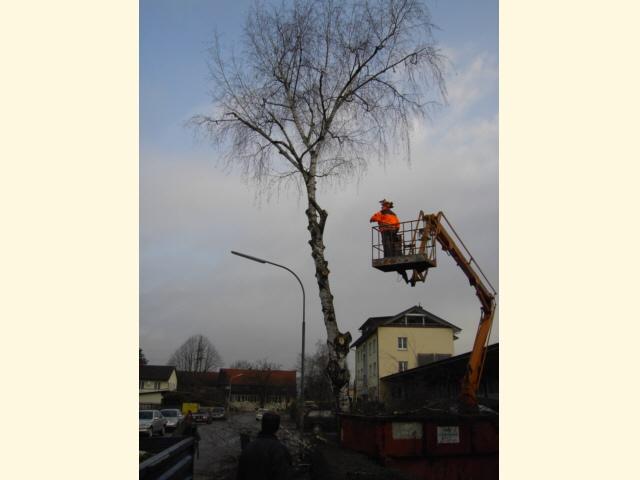Baumschnitt - Zwischenzustand